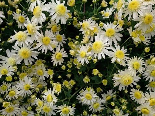 flower1218.jpg
