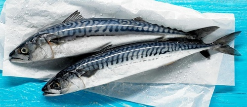 Norway_mackerel.jpg