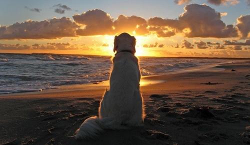 dog_heaven.jpg