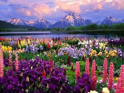flowers0523.jpg
