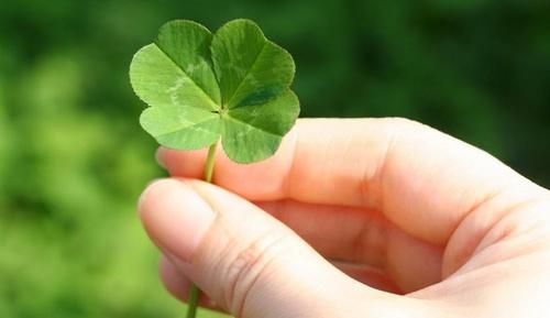 four-leafed-clover.jpg