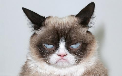 funny-cat-1605-1.jpg