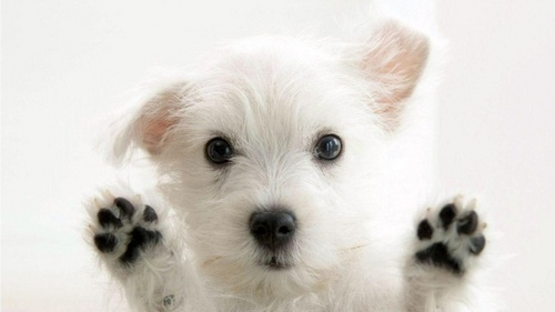funny_dog_white.jpg