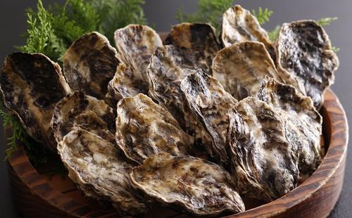 oyster_oct-5.jpg