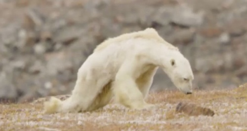 polar-bear-clime.jpg