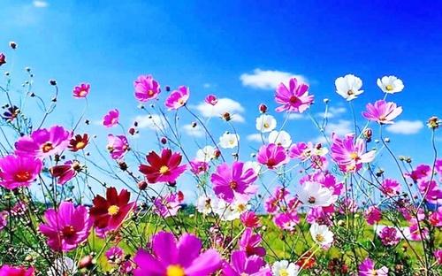 spring_bright.jpg