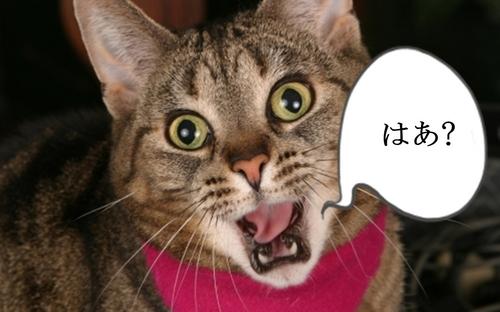 surprise-cat.jpg