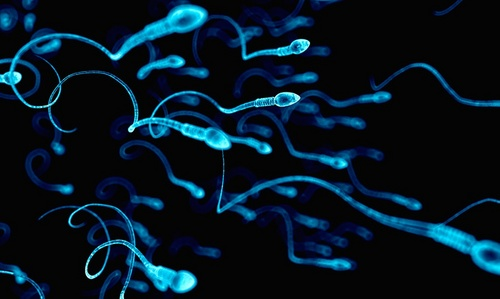 swimming sperm.jpg